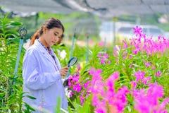 Исследователи орхидеи женщин исследующ и документирующ характеристики орхидей в саде стоковое изображение rf
