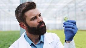 Исследователь принимает зонд зеленого растения и кладет его в чашка Петри Аграрный инженер работая в парнике видеоматериал
