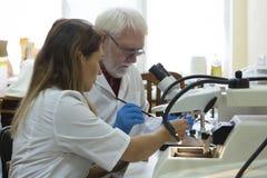Исследователя здравоохранения работая в лаборатории наук о жизни стоковые фото