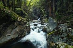 Исследовать глубоко в лесе стоковая фотография