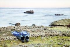 исследуйте готовое к подводному миру стоковое фото rf