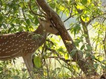 Исследуйте национальный парк corbett Индии jim стоковая фотография rf