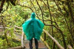 Исследуйте предпосылку дождевого леса с зелеными мхами и папоротником стоковое изображение