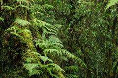 Исследуйте предпосылку дождевого леса с зелеными мхами и папоротником Стоковое Фото