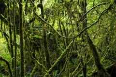 Исследуйте предпосылку дождевого леса с зелеными мхами и папоротником Стоковые Фотографии RF