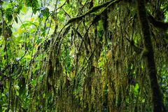 Исследуйте предпосылку дождевого леса с зелеными мхами и папоротником стоковая фотография rf
