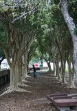 Исследуя деревья, который нужно взобраться Стоковая Фотография RF