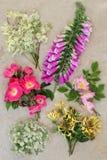 Исследование природы Wildflower лета стоковые изображения rf