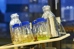 Исследование фотосинтеза используя научное оборудование Стоковое Изображение