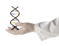 Исследователь при перчатка держа модель молекулы дна стоковая фотография rf