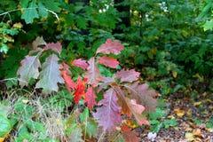 листво осени цветастое Стоковые Изображения RF