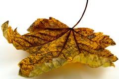 листво осени цветастое Стоковое Фото