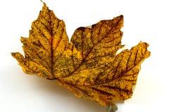 листво осени цветастое Стоковые Изображения