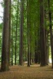 листво падения yosemite Стоковое Фото