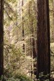 листво падения yosemite Стоковое Изображение RF