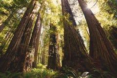 листво падения yosemite Стоковые Фотографии RF
