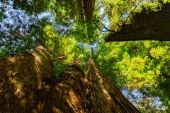 листво падения yosemite Стоковые Фото