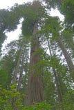 листво падения yosemite Стоковая Фотография RF