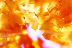 листво Стоковые Изображения RF