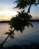 Истинная ветвь в солнечном свете Стоковые Изображения RF