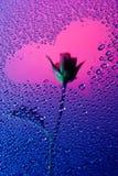 Истинная серия предпосылки влюбленности Стоковые Изображения RF