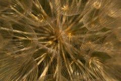 Источники света Стоковое Изображение RF