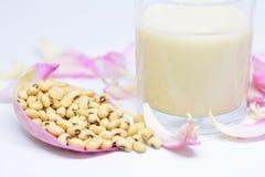 Источник белка сои Стоковое Изображение