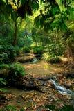 Тропический источник воды Стоковая Фотография