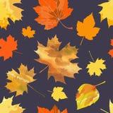 2008 листьев листьев рощи сухого падения осени воздуха золотистых около дуба России -го октября поворачивают которые обматывают ж Стоковые Изображения