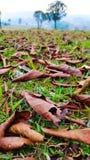 2008 листьев листьев рощи сухого падения осени воздуха золотистых около дуба России -го октября поворачивают которые обматывают ж Стоковая Фотография RF