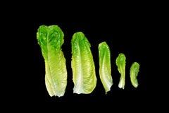5 листьев салата изолированных на черноте Стоковая Фотография