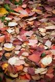 8 листьев eps предпосылки осени включенных архивом Стоковое Изображение