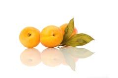 листья абрикосов зеленые Стоковые Фото