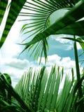 листья ладони с предпосылкой голубого неба Стоковое Изображение RF