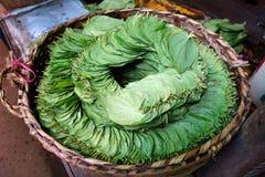 листья бетэла, Мьянма Стоковые Фото