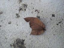 листья близнеца стоковые фотографии rf