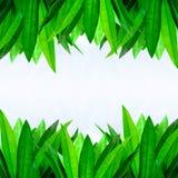 листья граници зеленые Стоковые Фото
