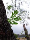 листья деревьев завода Стоковое Изображение