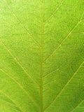 листья детали зеленые Стоковые Изображения RF