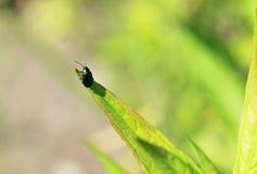 листья жука Стоковые Изображения