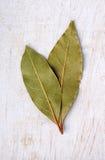 листья залива свежими изолированные травами белые Стоковая Фотография RF