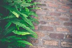 листья зеленого цвета папоротника свежие против предпосылки голубые облака field wispy неба природы зеленого цвета травы белое Стоковые Фото