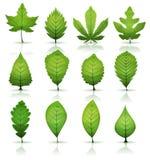 листья зеленого цвета установили иллюстрация штока