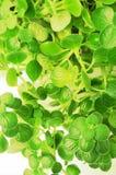листья зеленого цвета Стоковое Фото
