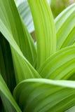 листья зеленого цвета Стоковые Изображения