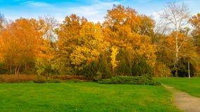 листья золота осени некоторые валы Стоковые Изображения RF