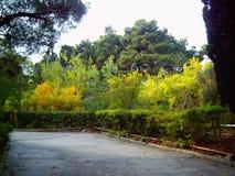 листья золота осени некоторые валы Стоковое Изображение RF
