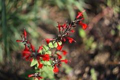 листья золота осени некоторые валы Стоковые Фото