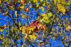 листья золота осени некоторые валы Стоковая Фотография