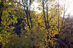 листья золота осени некоторые валы Стоковые Фотографии RF